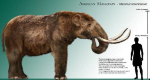 How is a Mastodon like a Bus?